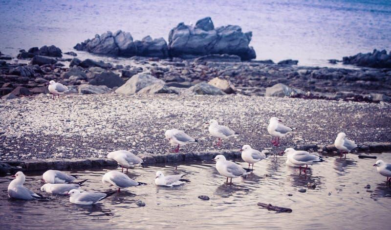 Чайки представленные счет красным цветом купая в свежей воде стоковые фото