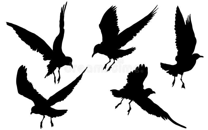 Чайки, чайки, птицы летая на белую предпосылку, чертеж иллюстрации вектора иллюстрация штока