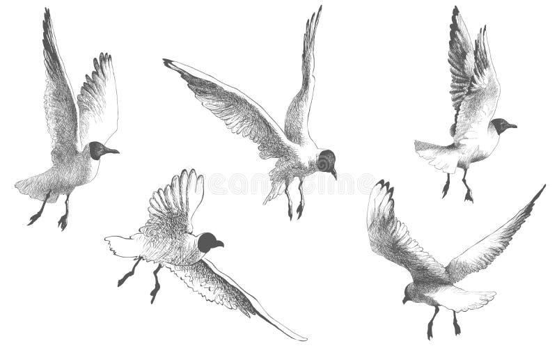 Чайки, чайки, птицы летая на белую предпосылку, чертеж иллюстрации вектора иллюстрация вектора