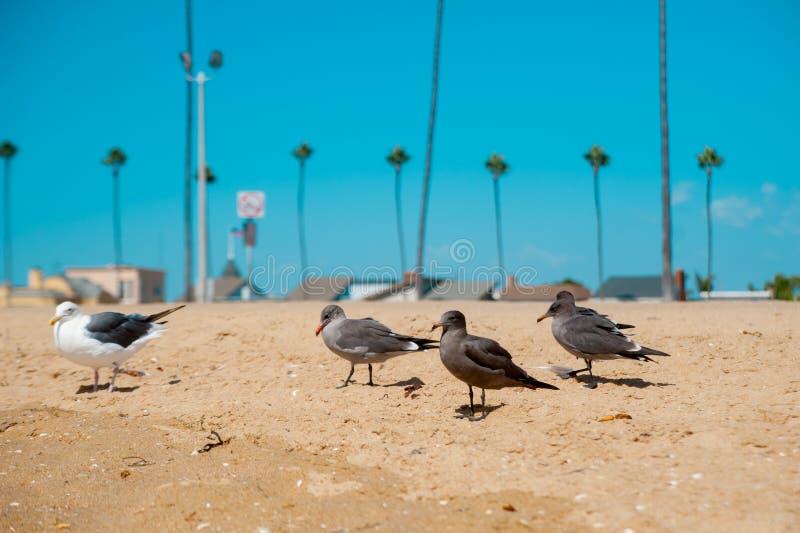Чайки смотря океан вокруг Лонг-Бич, Калифорния Калифорния с хорошим знана ли стоковое фото rf