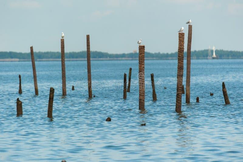 Чайки стоя на бамбуке стоковое изображение rf