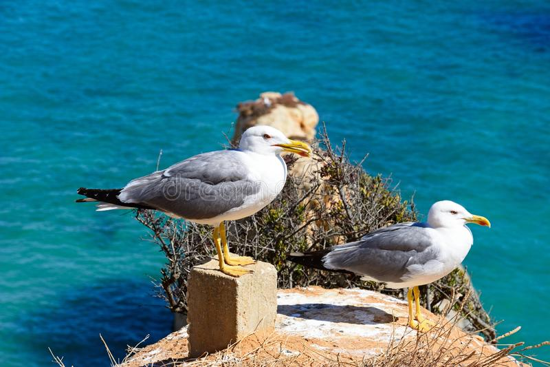 2 чайки стоя на скале, Прая da Rocha стоковое фото rf