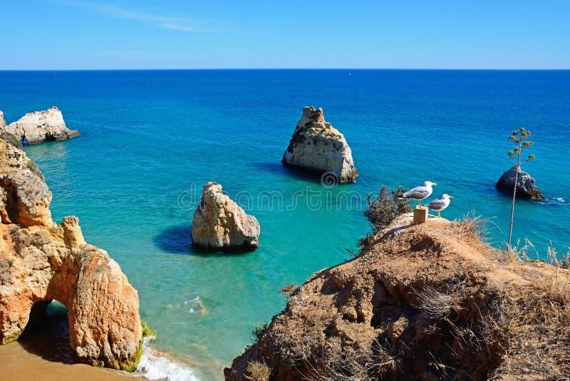 2 чайки стоя на скале, Прая da Rocha стоковые фото