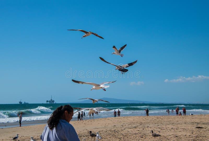 Чайки увиденный летать над пляжем около головы женщины Океан видим с оффшорной увиденной буровой вышкой стоковые изображения