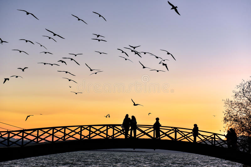 Чайки людей наблюдая на заходе солнца стоковое фото rf