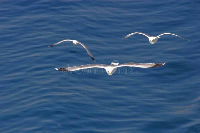 чайки стоковая фотография