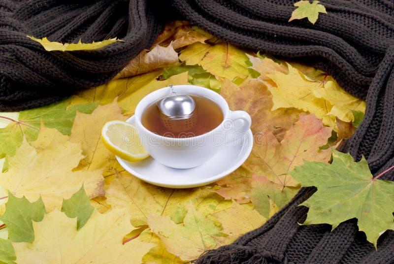 чай осени стоковая фотография rf