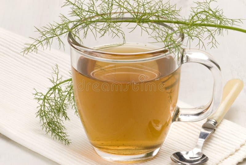 чай фенхеля травяной стоковые фото