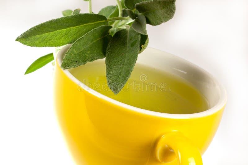 чай шалфея завода стоковое изображение