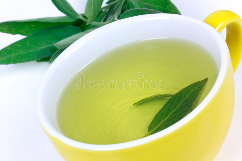 чай шалфея завода стоковое изображение rf