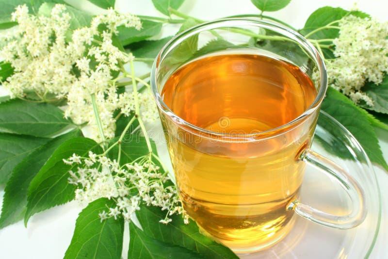 чай elderflower стоковая фотография rf