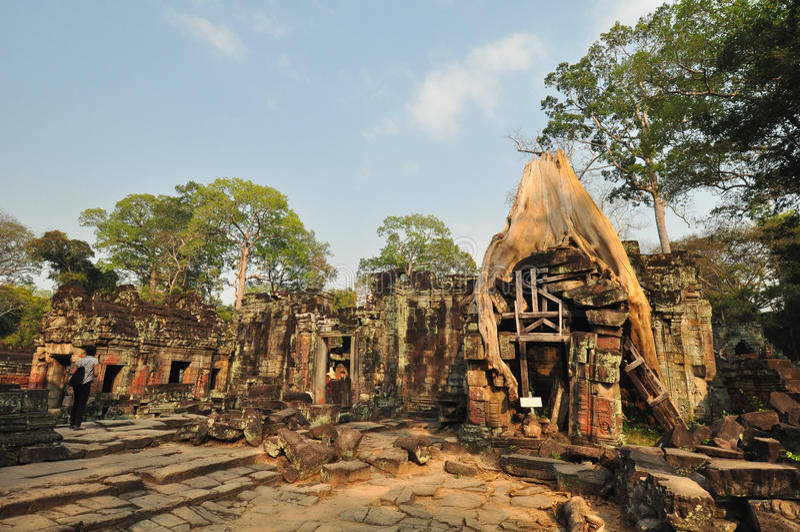 Части корня дерева перерастая старого виска Preah Khan на angk стоковое фото