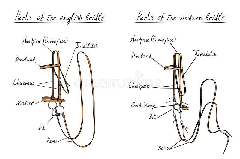 Часть английской и западной уздечки с битом на белизне иллюстрация вектора
