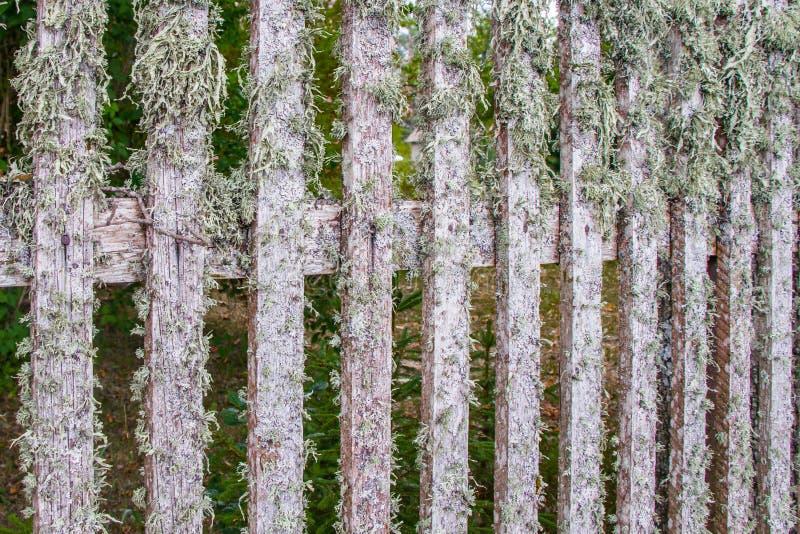 Часть деревянной загородки, покрытая с лишайником ( стоковые изображения rf