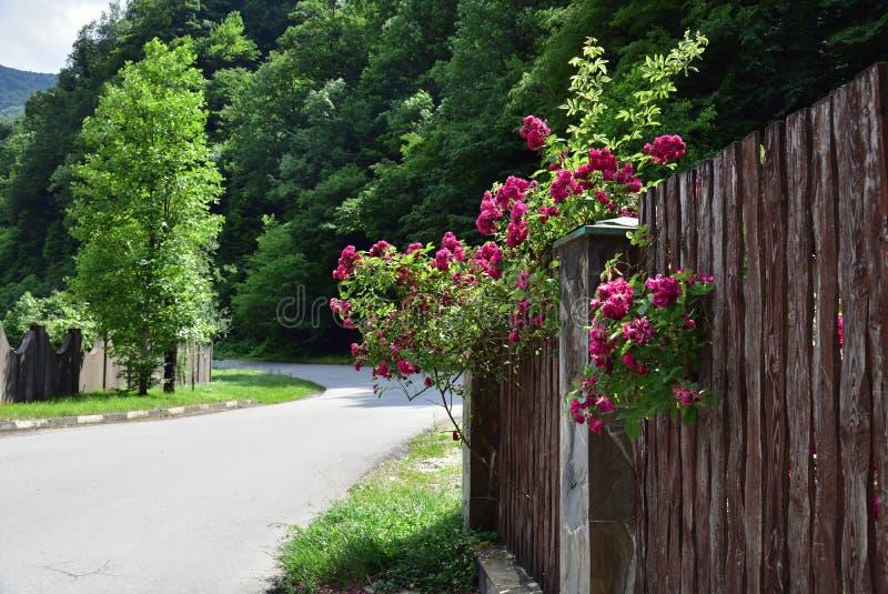 часть деревянной загородки с цветками на улице стоковое фото rf