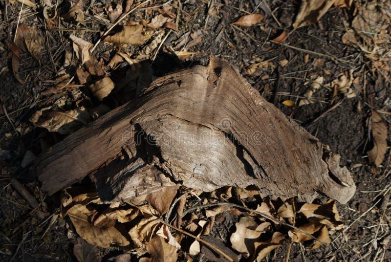 Часть древесины в пуще стоковые фотографии rf