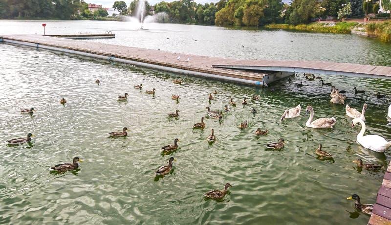 Часть озера замк в городке Walcz, Польши стоковая фотография