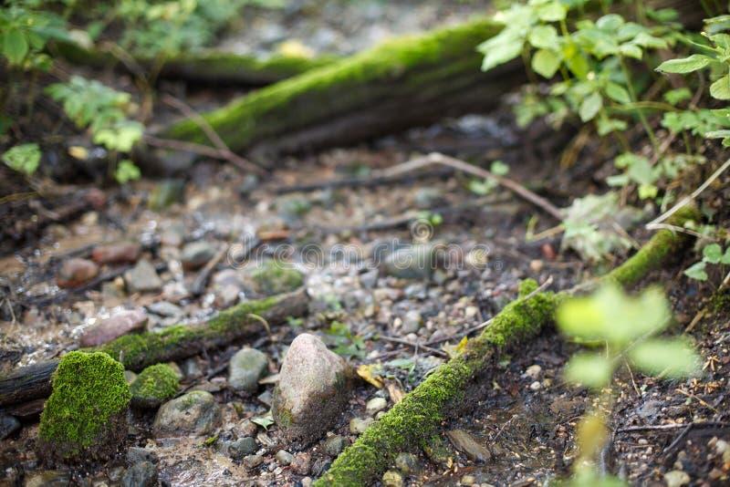 Часть природы в лесе и старом реке стоковое фото rf
