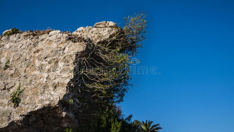 Часть старого камня, shrubby стены стоковая фотография rf