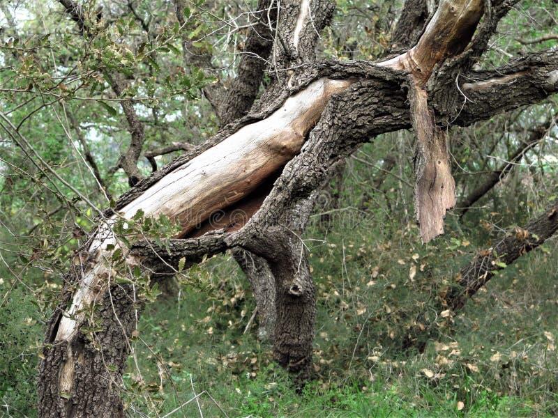 Часть ствола дерева стоковое фото rf