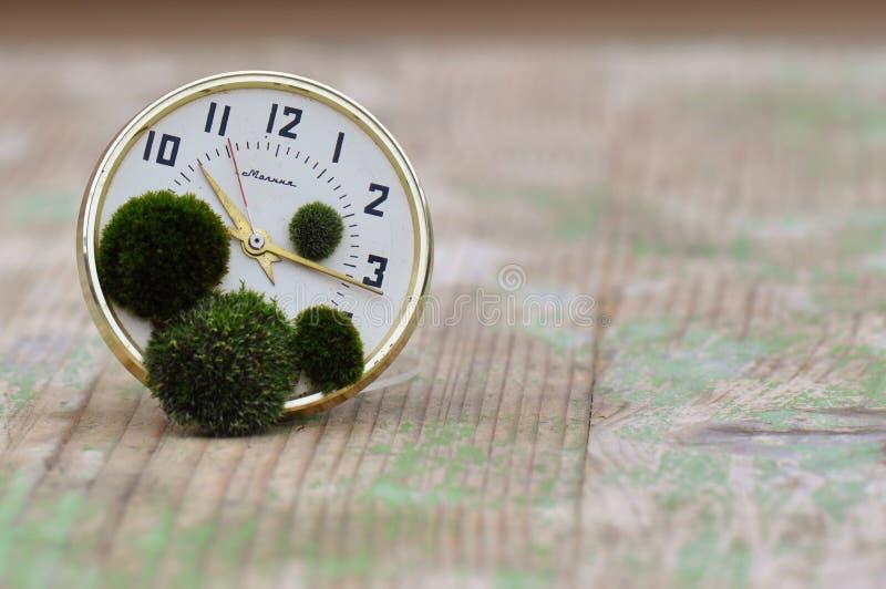 Часы с мхом стоковая фотография rf