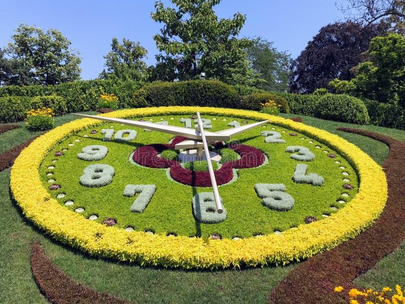 Часы цветка Женевы стоковое изображение rf