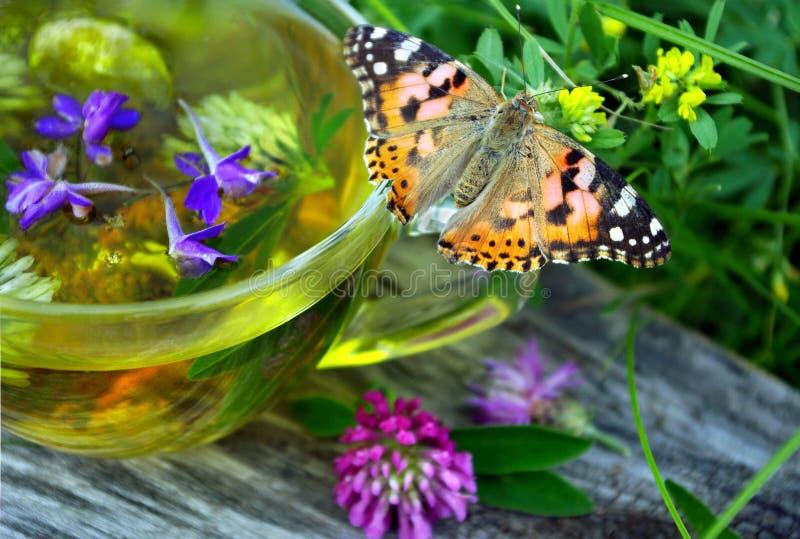 Чашка травяного чая и целебных трав на деревянном столе бабочка покрасила даму сидя на чашке травяного чая холод и грипп бэр стоковое изображение