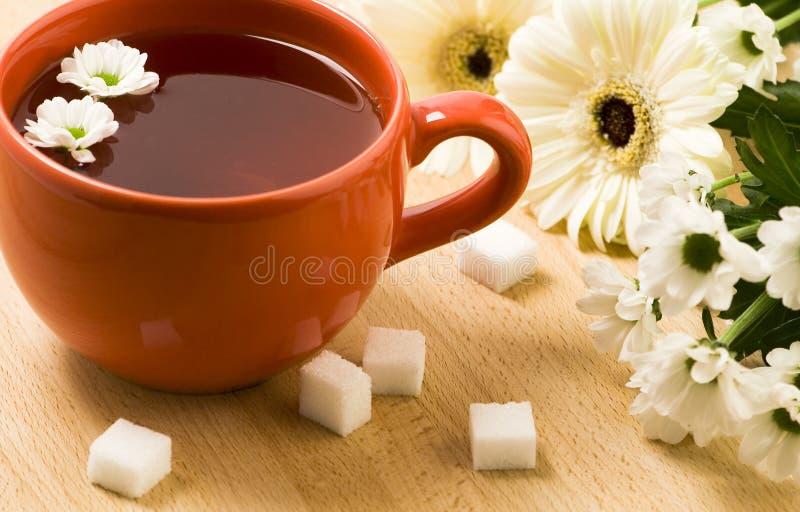 Чашка травяного чая стоковые изображения