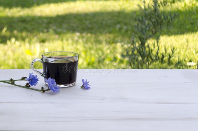 Чашка цикория стоковое изображение rf