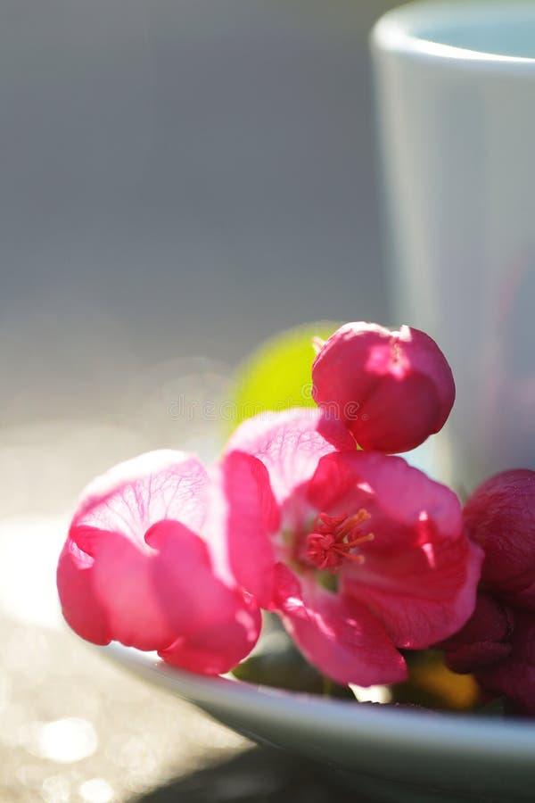 Чашка чаю с розовыми цветками стоковые фотографии rf