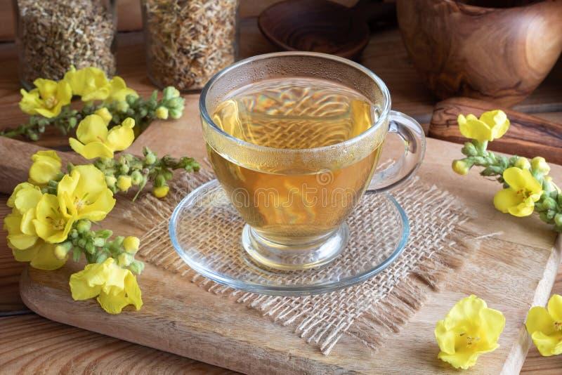 Чашка чая mullein с свежим зацветая mullein стоковое изображение