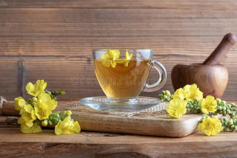 Чашка чая mullein с свежим зацветая mullein стоковые изображения rf