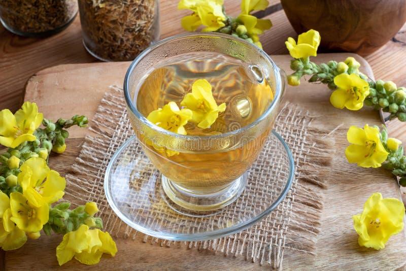 Чашка чая mullein с свежим mullein цветет стоковое фото