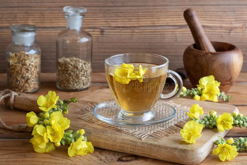 Чашка чая mullein с свежим mullein цветет стоковое фото rf