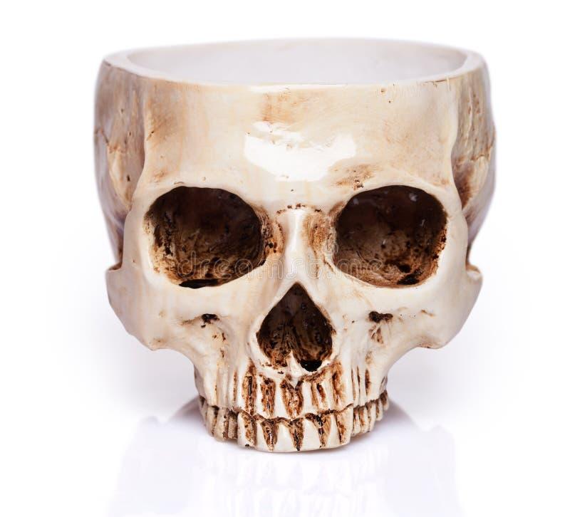 Чашка человеческого черепа стоковая фотография