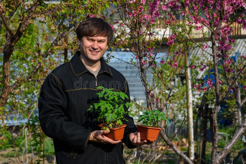 Человек будет держать контейнеры с саженцами перца и томатов на их коттедже лета стоковое изображение rf