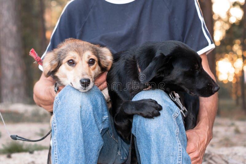 Человек в голубых одеждах sittting и держа 2 собак snuggled до одина другого в лесе стоковые изображения