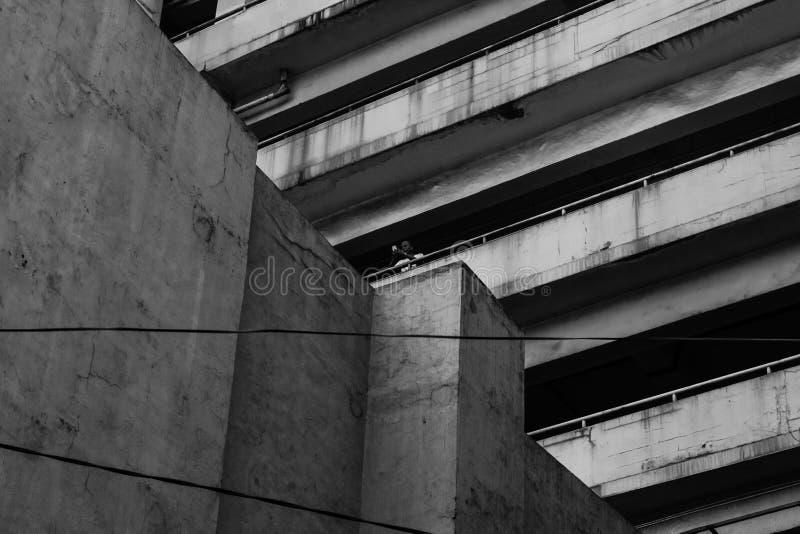 Человек в здании стоковое изображение rf