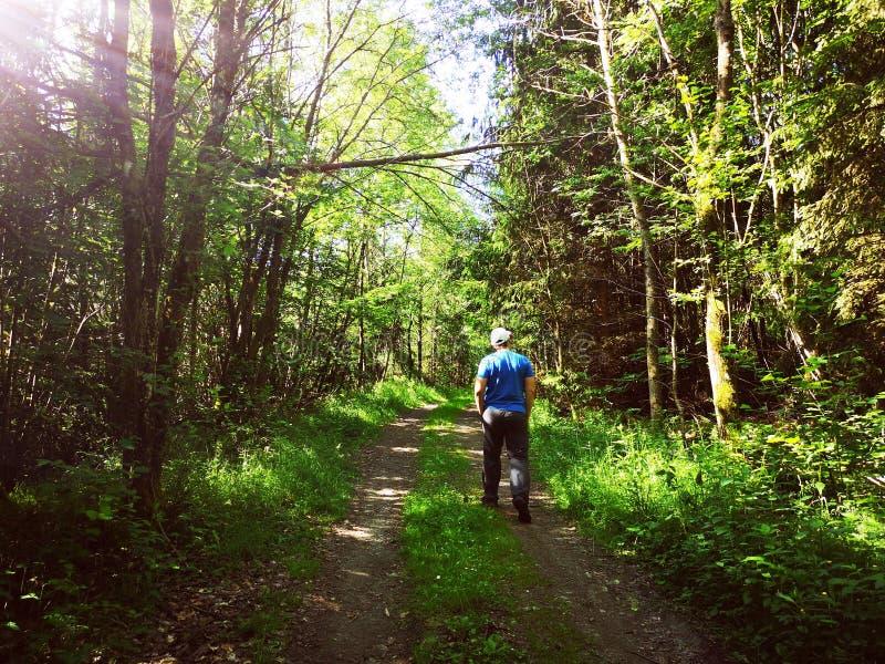 Человек в идти леса стоковое изображение rf