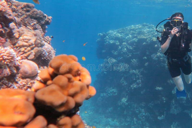 Человек в пикировании маски и костюма подводном с тропическими рыбами в бассейне моря кораллового рифа стоковое фото rf