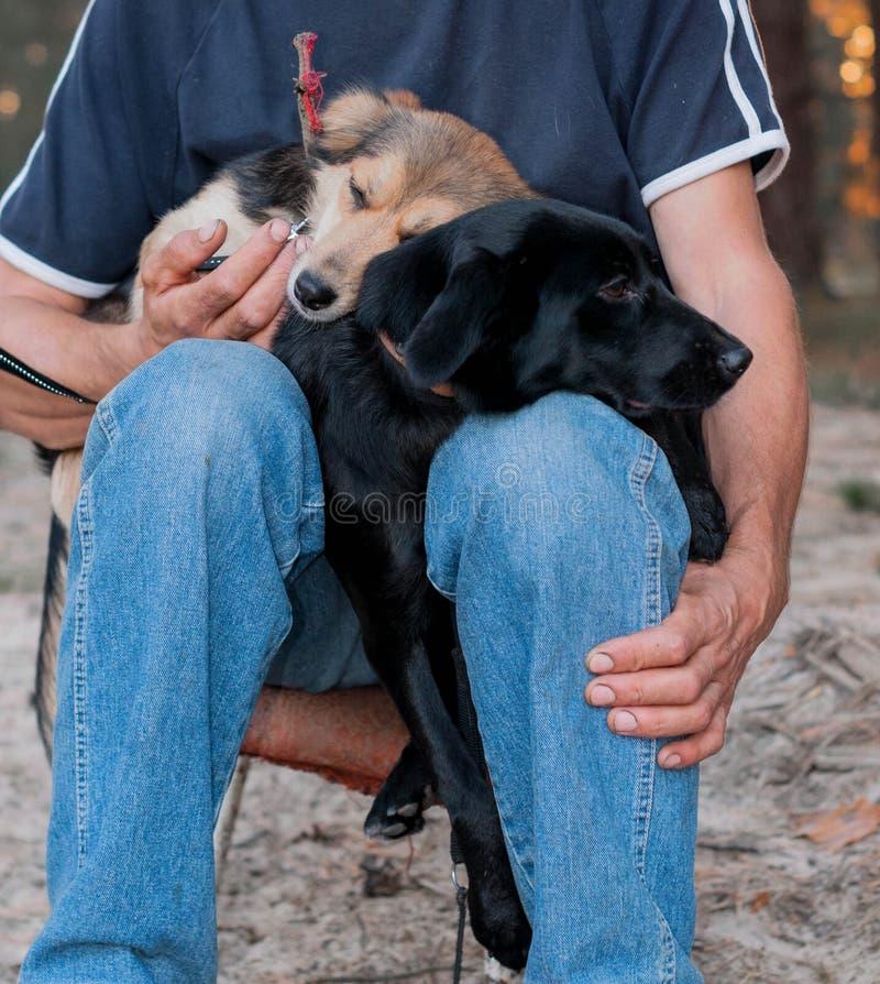 Человек держа милых собак snuggling вверх и отжимая друг к другу в лесе стоковые изображения