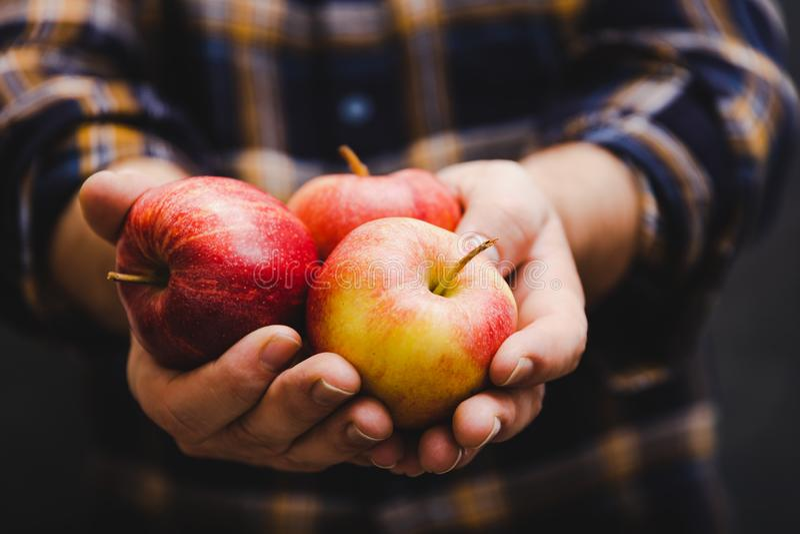Человек держа яблоки в его руках нося фланель стоковая фотография rf