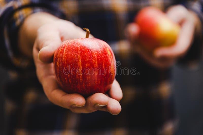 Человек держа яблоки в его руках нося фланель стоковые фото
