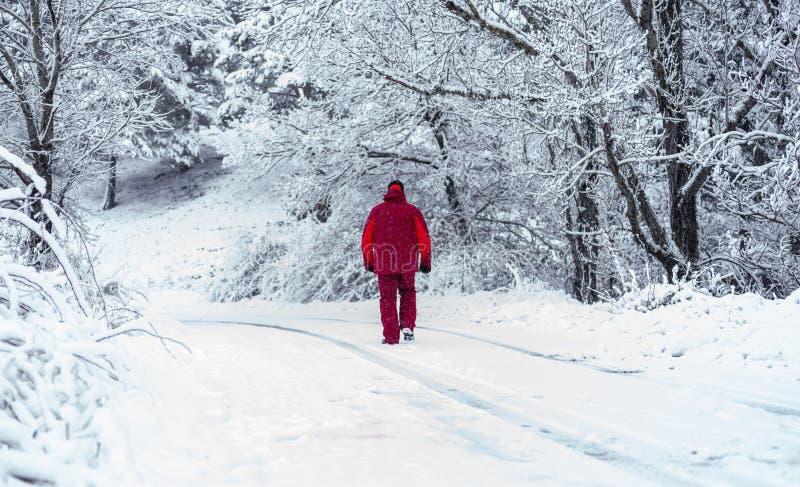 Человек идя через снежный лес стоковые фотографии rf