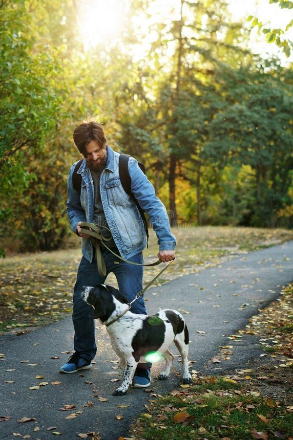 Человек и собака в парке осени стоковые изображения