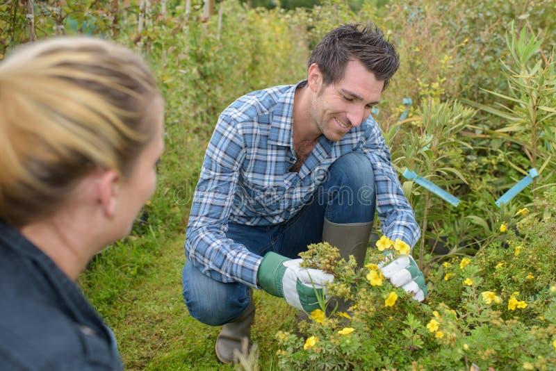 Человек комплектуя полевые цветки стоковые фото