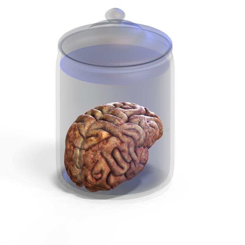 Download человек мозга иллюстрация штока. иллюстрации насчитывающей cerebration - 6864828