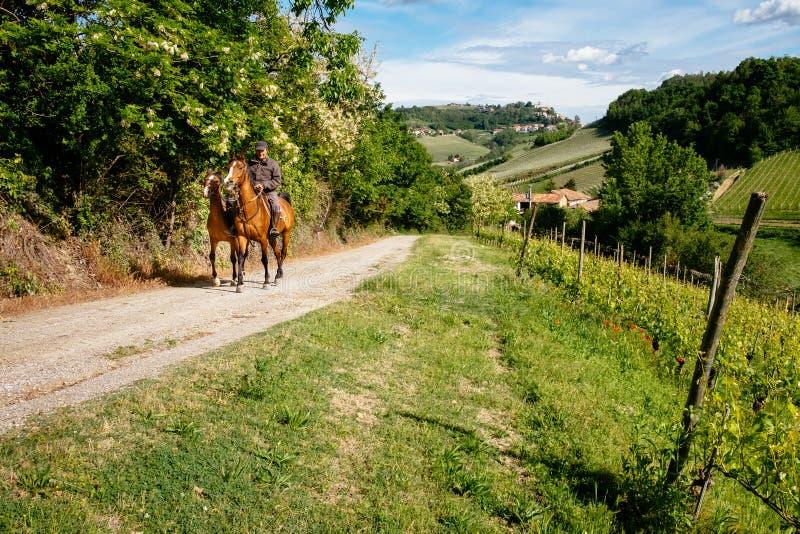 Человек на ездах лошади среди виноградника с деревней d'Alba Monforte Тропа от Barolo стоковое изображение rf