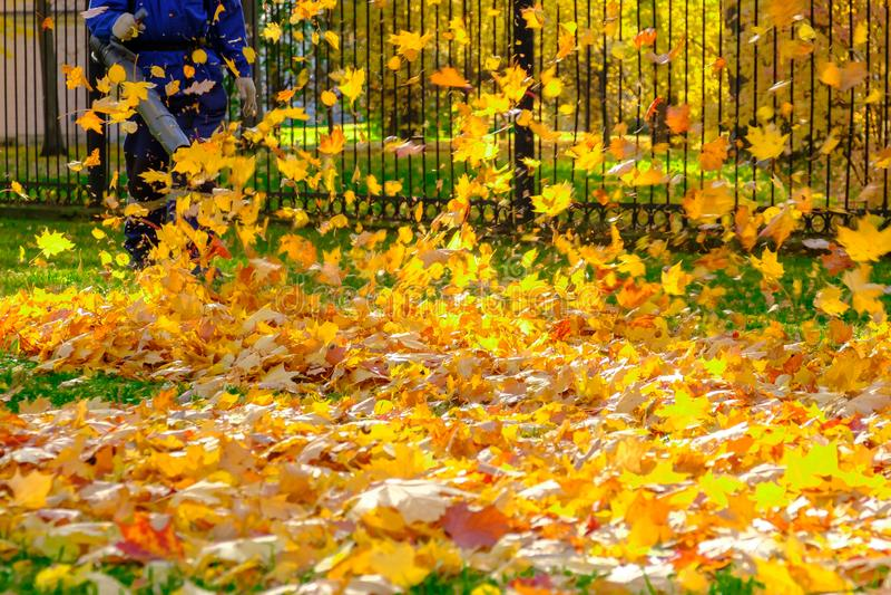 Человек очищает парк осени от упаденных листьев стоковые изображения rf