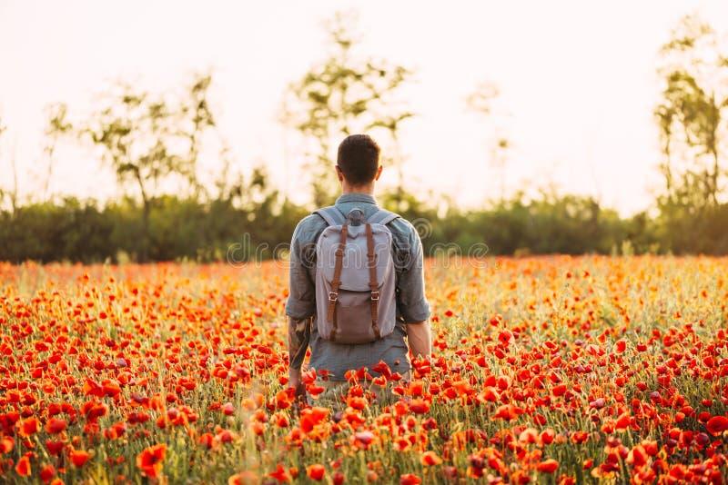 Человек путешественника идя в красный луг цветка мака стоковые фотографии rf